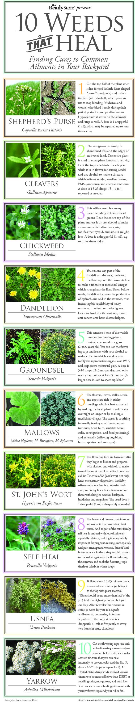 10 plantas comunes que te pueden curar