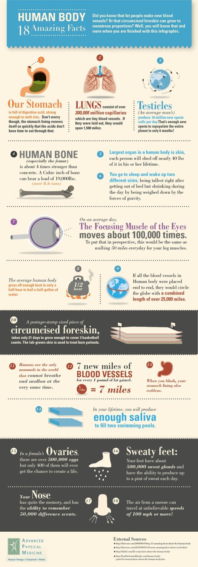 18 datos interesantes sobre el cuerpo humano
